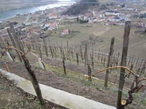 Above some of he Franz Hirtzberger vineyards