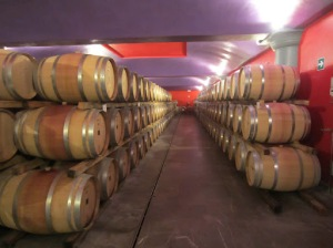 The bright cellars of Brancaia
