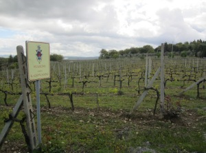 One of the Fuligni vineyards