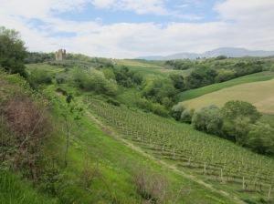 Steep trebbiano vineyards at Torre Raone
