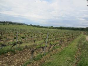 Domaine de Triennes vineyard