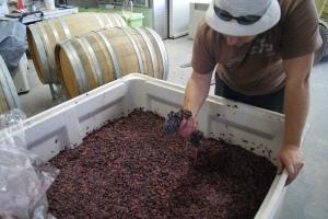 Michael checks some fermenting grenache
