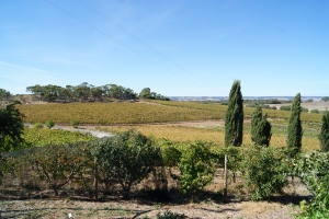 McLaren Vale at its best