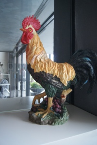 Galli rooster