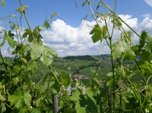 Lovely day for visiting vineyards in Barolo